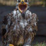 Greifvogelstation Hellenthal für Kinder