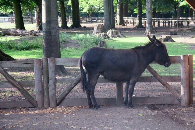 Lindenthaler Tierpark Esel und Ponyreiten
